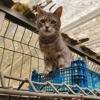 Ope, Chat européen à adopter