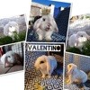 Valentino, Animal à adopter