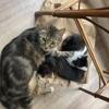 Luna, Chat à adopter