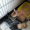 Pissenlit, Animal à adopter