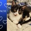 Gracie chatonne noire et blanche, Chaton à adopter