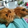 Guimauve et nougatine, Animal à adopter