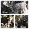 Lipton, fanta et oasis, Chaton à adopter