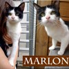 Marlon le tombeur, Chat à adopter