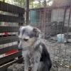 Hona, Chien à adopter