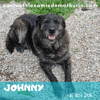 Johnny, Chien à adopter