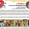 Penny, Chiot à adopter