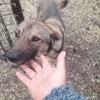 Tsarine, Chien à adopter