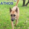 Athos, Chien à adopter