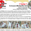 Lucy, Chiot à adopter