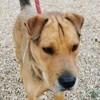 Paco (réservé), Chien à adopter