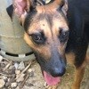 Lovea, Chien à adopter