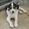 Lucky, Chiot à adopter
