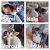 Filou, marcus, nala et sami, Chaton à adopter