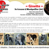 Ginette, Chiot border collie à adopter