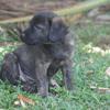 Dara, Chiot à adopter