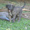Aroon, Chiot à adopter