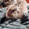 Skitty, Animal à adopter