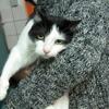Gusty, Chat angora turc à adopter