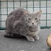 Jojo, Chat croisé / autre (europeen) à adopter