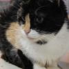 Mira 1 an, Chat européen à adopter