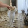 Tagada, Chat europeen à adopter