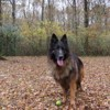 Getro, Chien berger allemand à adopter