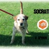 Socrate, Chien griffon à adopter