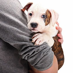 """Résultat de recherche d'images pour """"adopter animaux"""""""