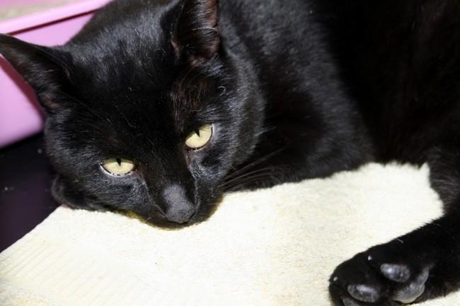 johnny chat europ en adopter dans la r gion pays de la loire. Black Bedroom Furniture Sets. Home Design Ideas