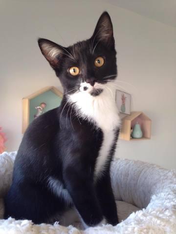 daffy chaton joueur et pot de colle 224 adopter chat 224 adopter dans la r 233 gion ile de