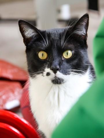 daffy chaton joueur et pot de colle 224 adopter chat europ 233 en 224 adopter dans la r 233 gion ile de