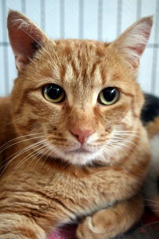 makito chat adopter dans la r gion pays de la loire. Black Bedroom Furniture Sets. Home Design Ideas