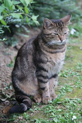 Chat sexe chaumont