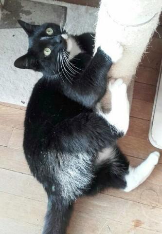 minouchat chat adopter dans la r gion pays de la loire. Black Bedroom Furniture Sets. Home Design Ideas