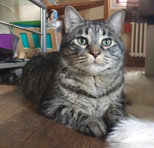 mattew chat adopter dans la r gion pays de la loire. Black Bedroom Furniture Sets. Home Design Ideas