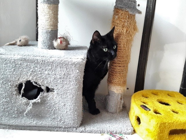 Joliette rencontre chat