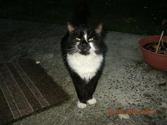 pot de colle chat europ 233 en 224 adopter dans la r 233 gion basse normandie
