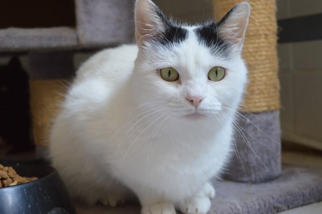 nina chat adopter dans la r gion midi pyr n es. Black Bedroom Furniture Sets. Home Design Ideas