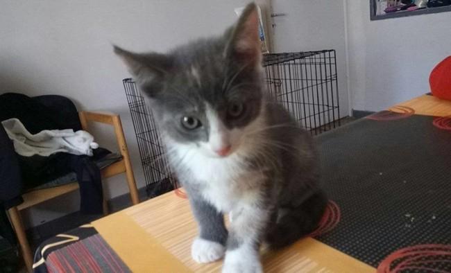 Kittie Chaton A Adopter Dans La Region Nord Pas De Calais