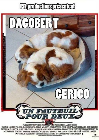 dagobert chien cavalier king charles spaniel adopter dans la r gion rh ne alpes. Black Bedroom Furniture Sets. Home Design Ideas