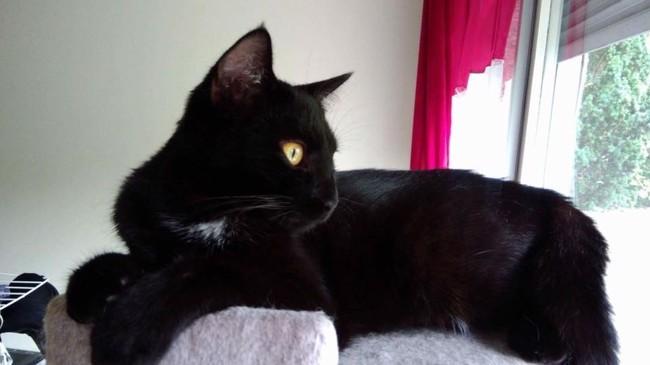 Facile chatte noire