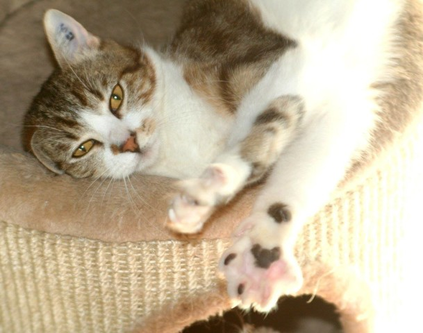 Chat forbach