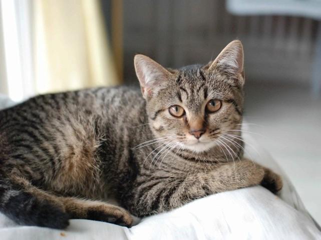 naoma chat Adoptez naoma : chaton proposé à si vous êtes intéressés par ce chat vous pouvez nous contacter au 06 76 51 82 16 ou par mail en précisant bien votre.