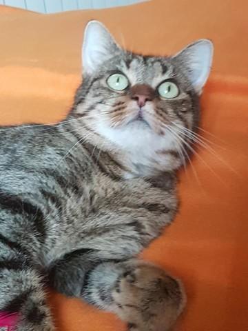 coquine chat adopter dans la r gion haute normandie. Black Bedroom Furniture Sets. Home Design Ideas