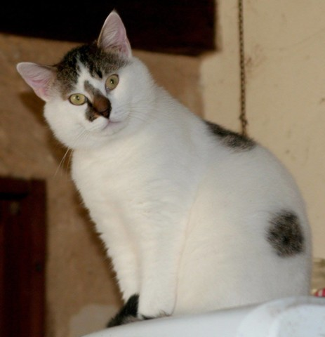 Adopter un chat de 8 mois