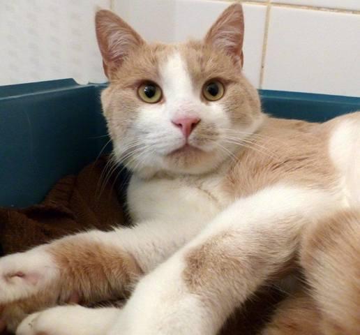 hobbs chat Cafetière russell hobbs : trouvez le meilleur prix parmi des centaines de marchands guides d'achat & tests produits en ligne.