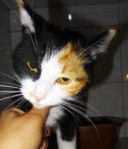 Chat jeune maroc