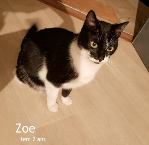 zoe chat Zoochat community, discission forums and photo galleries for zoo, aquarium and animal conservation enthusiasts worldwide.