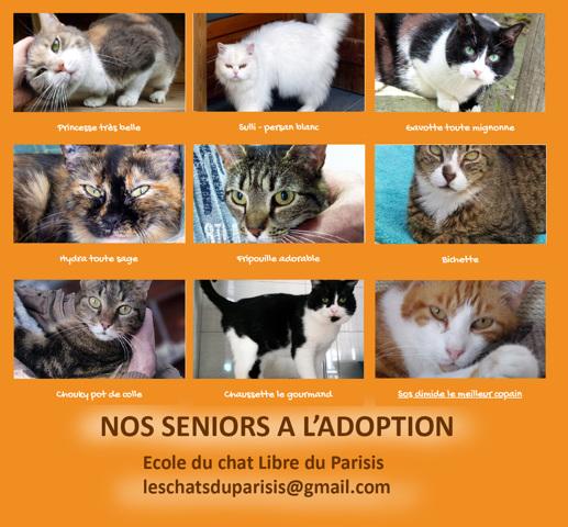 Nos Chats Seniors A L Adoption Chat A Adopter Dans La Region Ile De France
